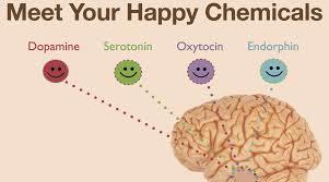 endorfiner i hjernen